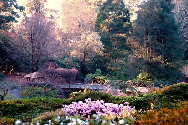 dandenong-gardens-arm